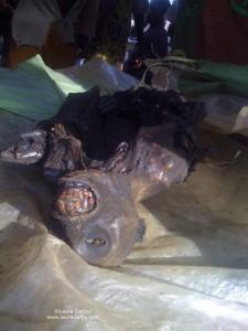 Smoked guenon carcass